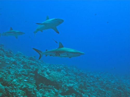 Haischutzzone