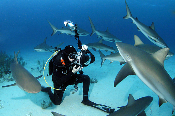 Taucher fotografiert Haie Bahamas