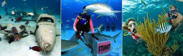Pressebereich Stuart Cove's Dive Bahamas