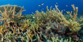 Korallenzuchtprogramm - Amun Ini Beach Resort & Spa