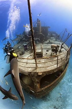 Wrack Stuart Cove's Dive Bahamas