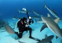 Haie Unterwasserfotografie