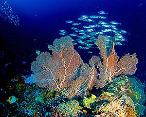 Bunaken-Oasis-Unterwasser-01