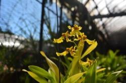 Orchideen Zuchtprogramm Palau