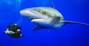 Haie und Taucher