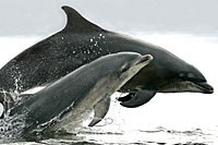Delfine Nordsee